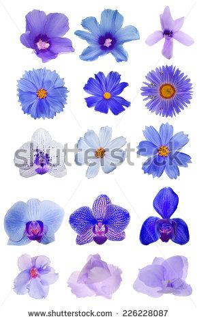 Reddish violet free stock photos download (468 Free stock photos.