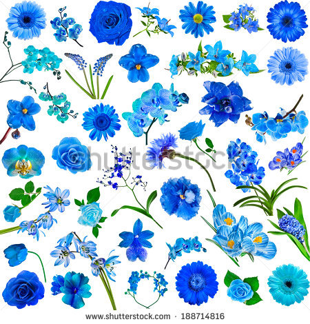 Blue flowers free stock photos download (15,325 Free stock photos.