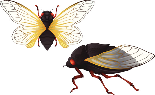 Auchenorrhyncha Clip Art, Vector Images & Illustrations.