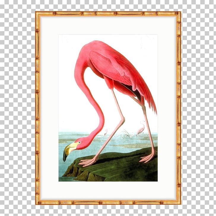 The Birds of America American flamingo National Audubon.