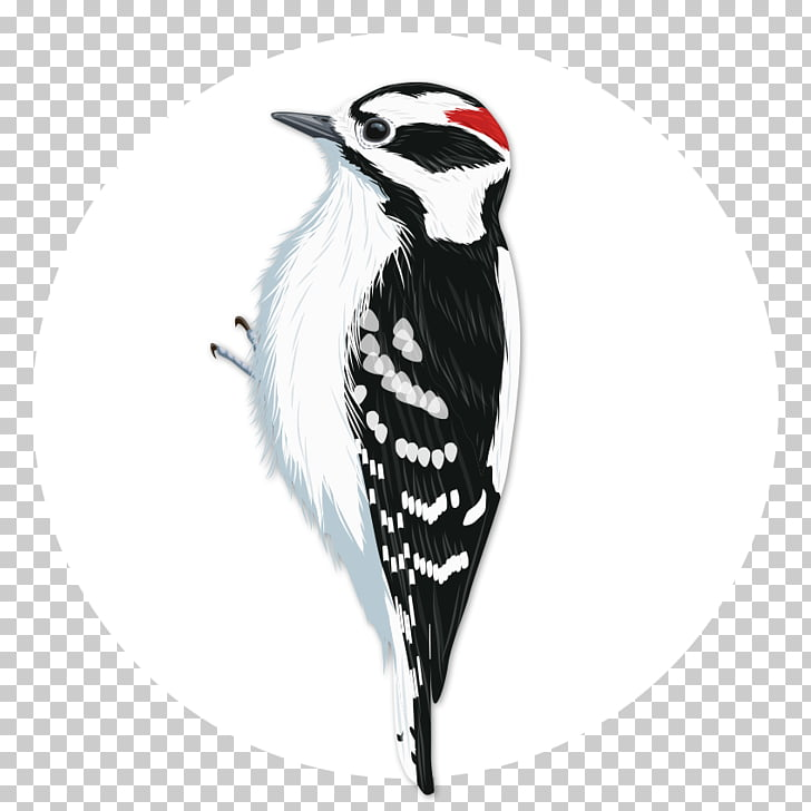 Downy woodpecker Bird Penguin National Audubon Society, Bird.