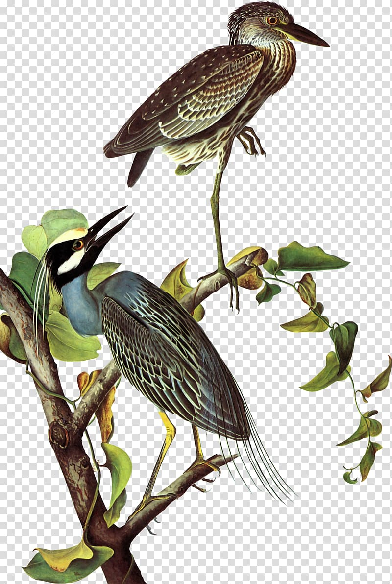 The Birds of America Heron National Audubon Society New.