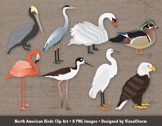 1000+ images about Animal Illustrations & Clipart.