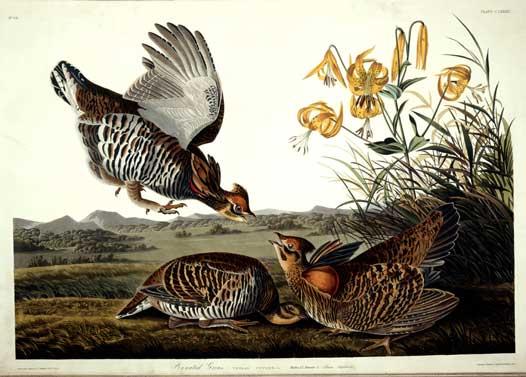 Even John James Audubon Sold Clip Art.