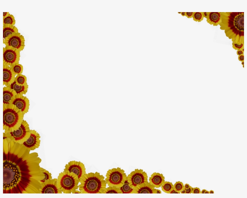 Daisy Flower Border Png Image.
