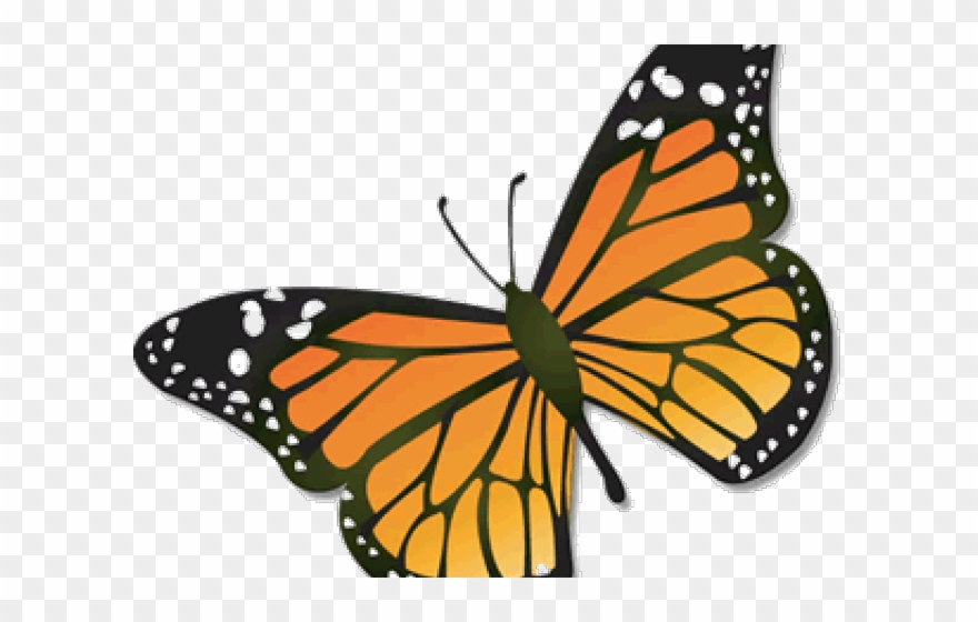 Monarch Butterfly Clipart August.