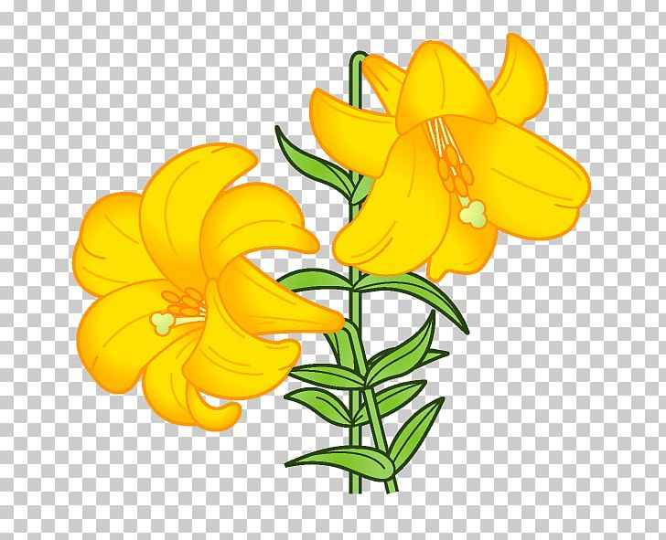 Lilium Flower Book Illustration PNG, Clipart, August, Birth.