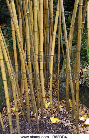 Canes Stock Photos & Canes Stock Images.