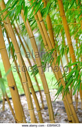Vivax Stock Photos & Vivax Stock Images.