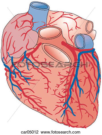 Clip Art of Heart showing coronary arteries and right auricle with.