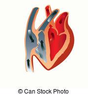 Left auricle Vector Clip Art EPS Images. 5 Left auricle clipart.