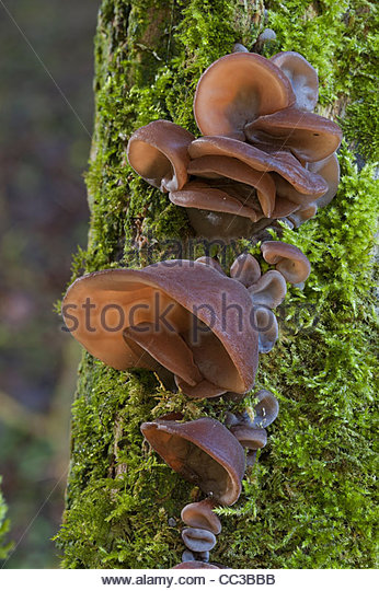 Nutrient Cycle Stock Photos & Nutrient Cycle Stock Images.