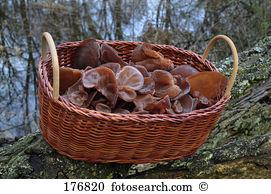 Wood ear fungus Stock Photos and Images. 174 wood ear fungus.