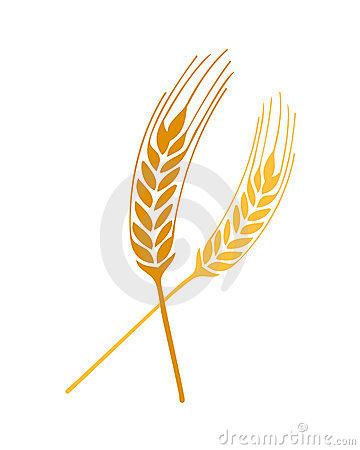 Weizen Entspringt Vektor Stockfotos.