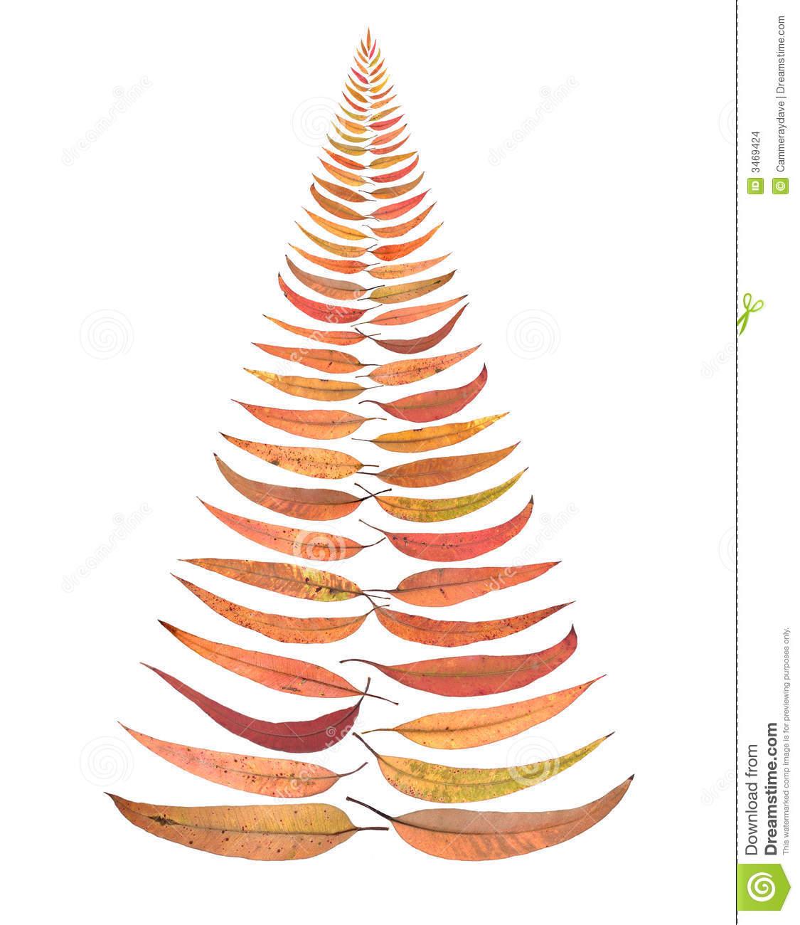 Australia Australian Christmas Tree Leaves Stock Photo.