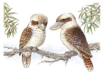 kookaburra painting.