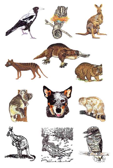 Aussie Animals & Birds by Glenn Harris OUT.