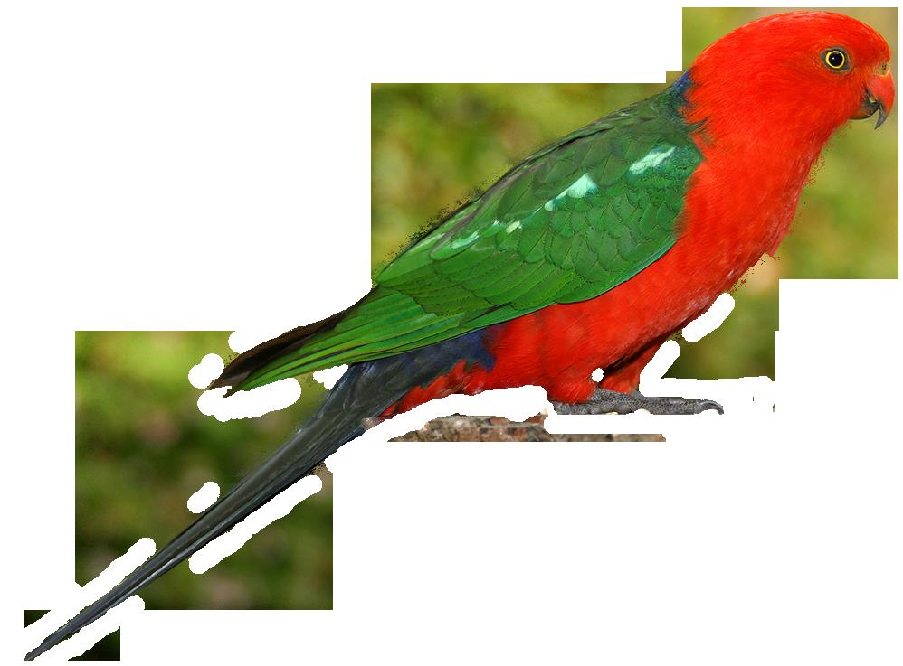 Australian Birds Clip Art.