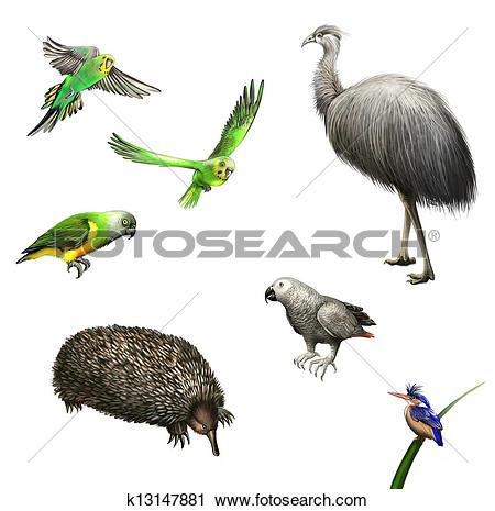 Clipart of Ostrich Emu, budgies,Grey Parrot, green Parrot, echidna.