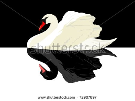 Black Swan Stock Images, Royalty.