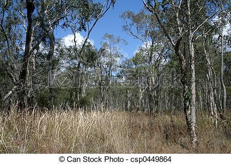 Stock Photo of Dry Bushland.