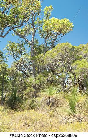 Stock Photography of Australian Bush.