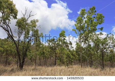 Australian bush clipart.