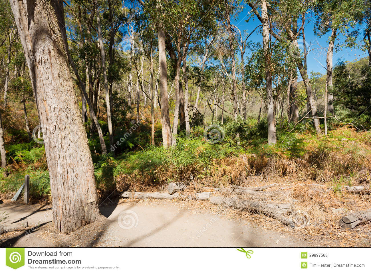 Australian Bush Landscape Stock Photos.
