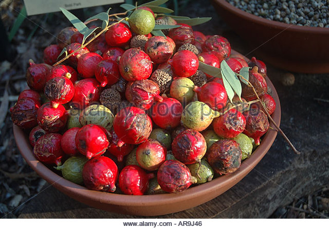 Australian Native Fruits Stock Photos & Australian Native Fruits.