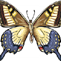 Australian Painted Lady Butterfly Clipart, Med 15cm Wide Pictures.