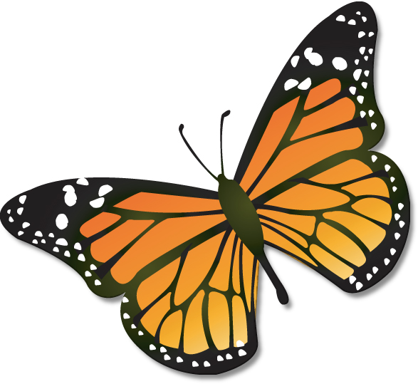 Butterfly clipart png images.