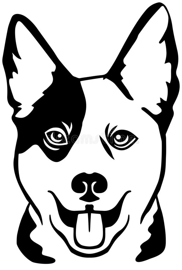 Australian Cattle Dog Stock Illustrations.