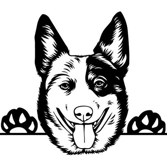 Australian Cattle Dog #5 Peeking Aussie Smiling Happy Breed Puppy Pedigree  Purebred Animal Pet Logo .SVG .PNG Vector Cricut Cut Cutting File.