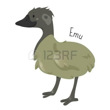 310 Australian Bird Stock Vector Illustration And Royalty Free.