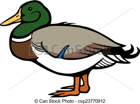 Mallard duck Clipart and Stock Illustrations. 623 Mallard duck.