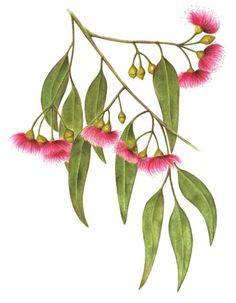 Clipart australian trees.