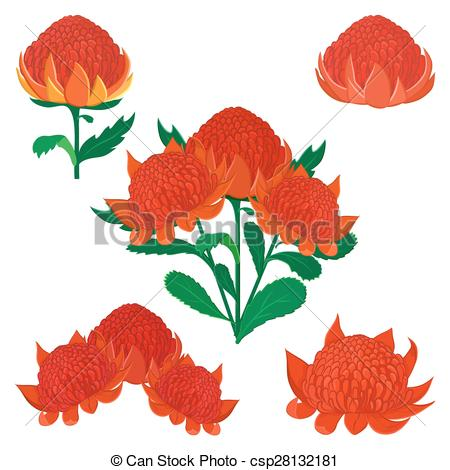 Australian flora Illustrations and Clip Art. 192 Australian flora.
