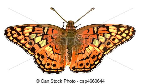 Fritillary butterfly Stock Illustrations. 14 Fritillary butterfly.