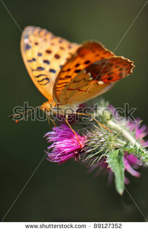 Two Beautiful Butterflies Isolated Stock Photos, Royalty.