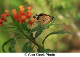 Fritillary butterfly Stock Illustrations. 14 Fritillary butterfly.