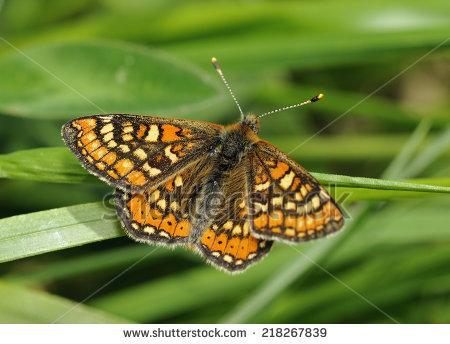 Uk Butterflies Stock Photos, Royalty.