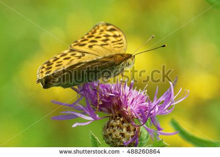 Portfolio von Heiti Paves auf Shutterstock.