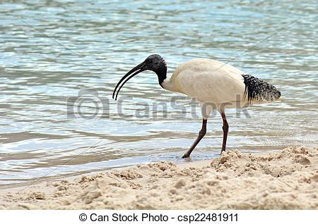 Stock Photography of Australian birds.