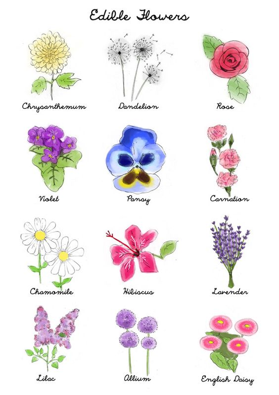 Your Guide to Edible Flowers.