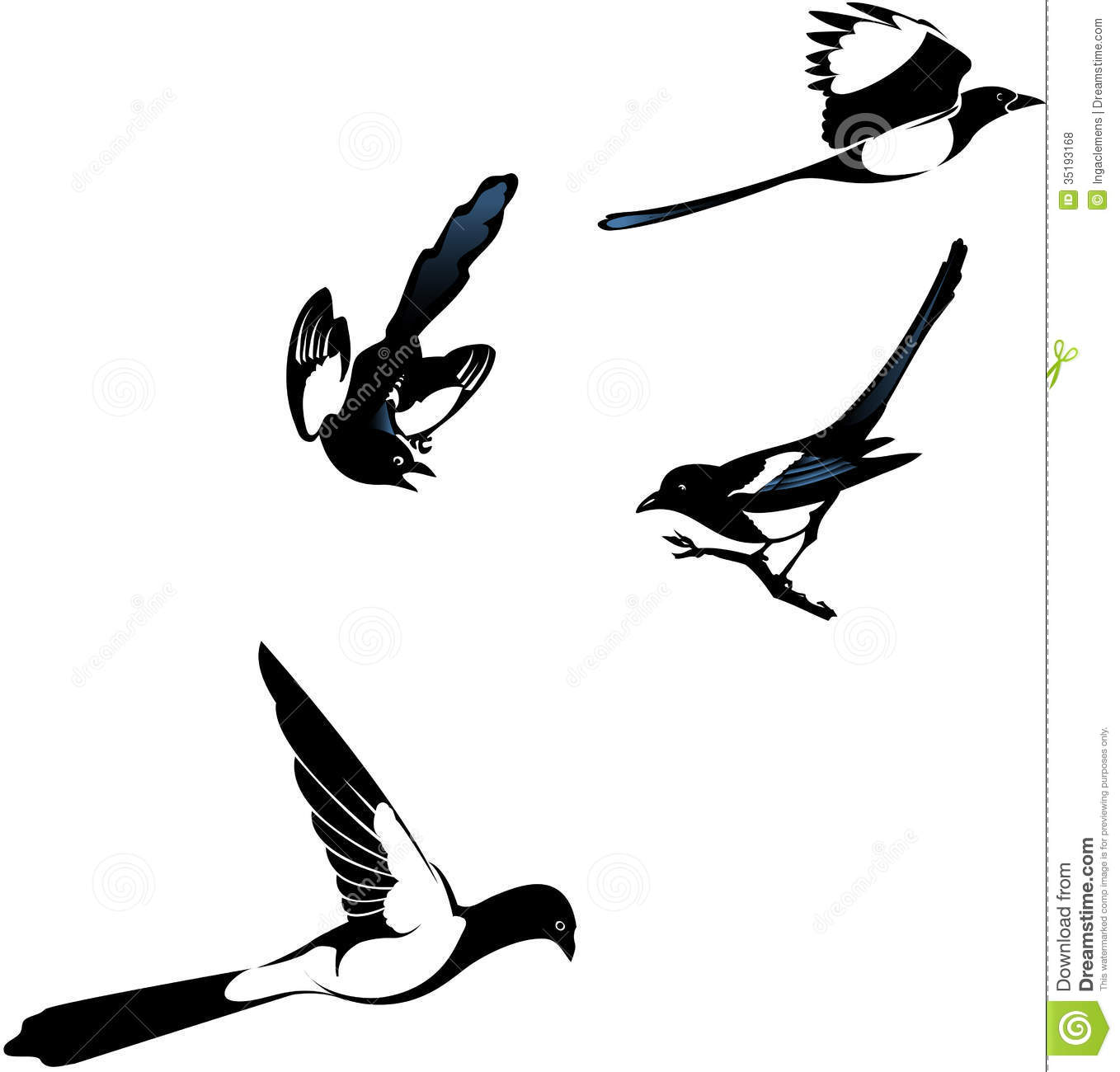 Gallery For > Clipart Australian Magpie.