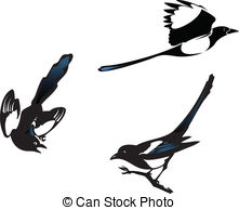 Magpie Illustrations and Clip Art. 259 Magpie royalty free.