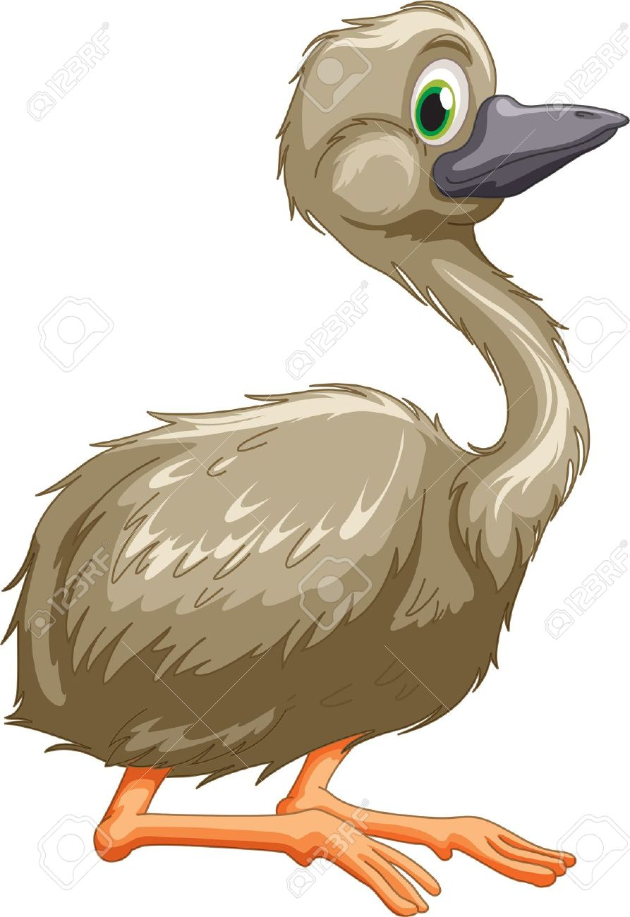 Illustration Of Isolated Emu Bird Royalty Free Cliparts, Vectors.