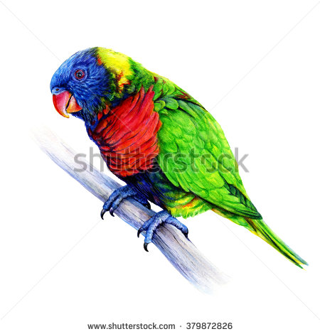 Rainbow Bird Stock Photos, Royalty.