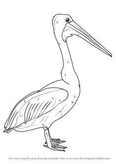 Free printable pelican drawing..