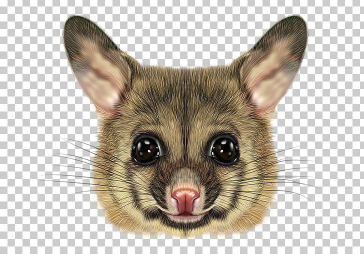 Phalangeriformes Common Brushtail Possum Opossum PNG.